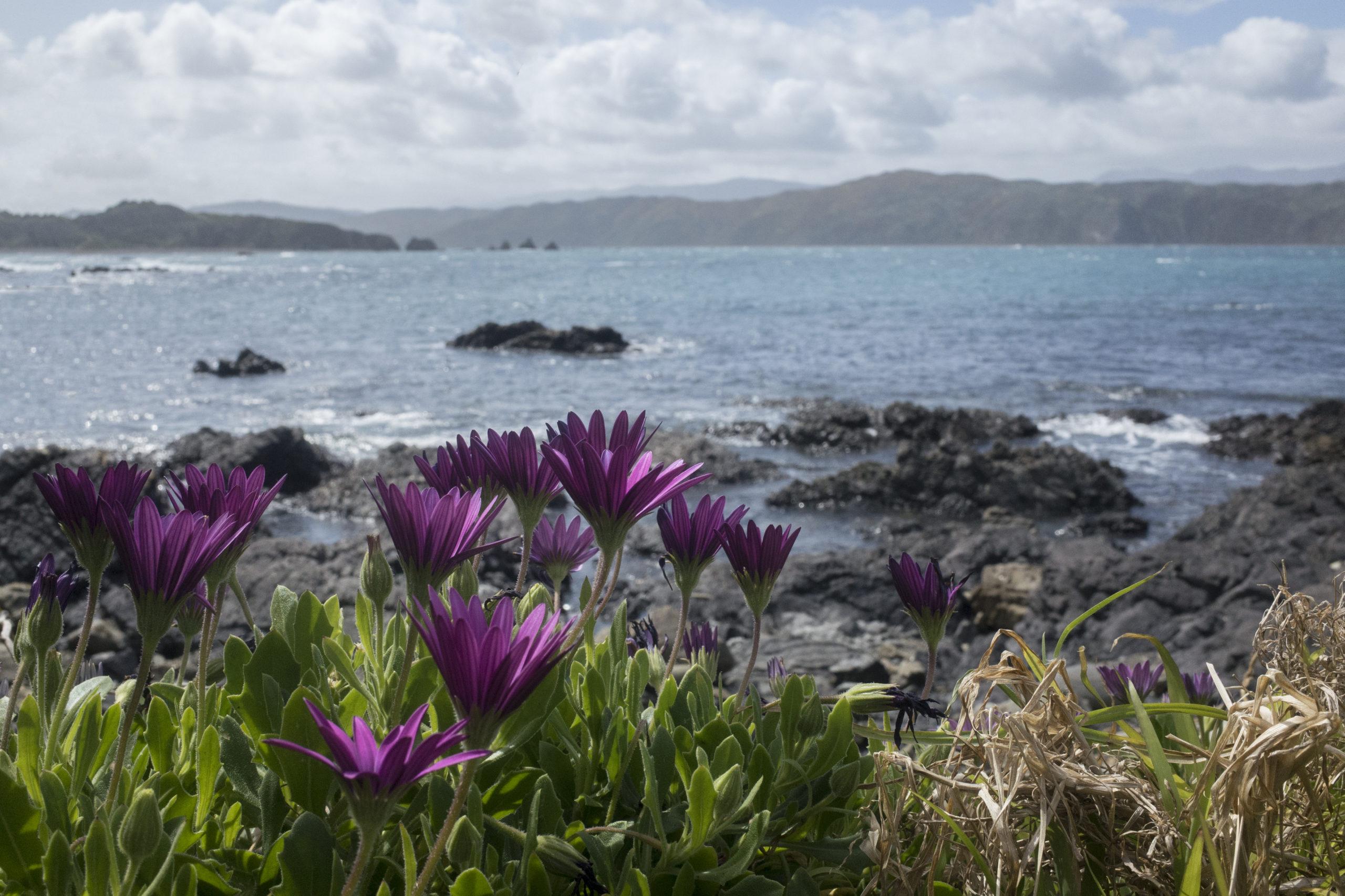 Photograph of Breaker Bay, New Zealand